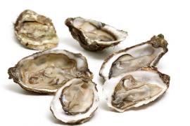 牡蛎是什么?牡蛎有什么具体的作用及牡蛎的用法用量
