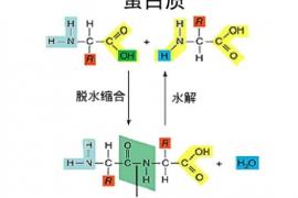 人参牛骨髓小分子肽粉的功效
