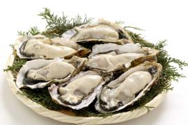 人参牛骨髓鱼胶原蛋白牡蛎复合肽中的牡蛎肽