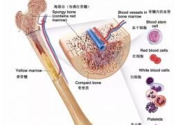 老年人每天喝一包牛骨髓复合肽,好处多得不可思议!