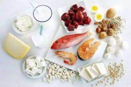 蛋白质对人体的重要作用