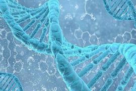牛骨髓多肽|小分子肽的作用