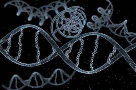 生物活性肽对基因表达的影响