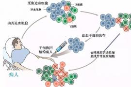 """干细胞堪称""""唐僧肉""""——是人类抗拒衰老的希望!"""