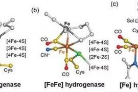 服用小分子肽必须注意的几个问题