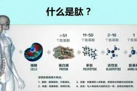 什么样的人适合吃小分子肽?小分子肽不适合什么人吃?