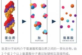 你真的了解小分子肽吗,原为肽.......