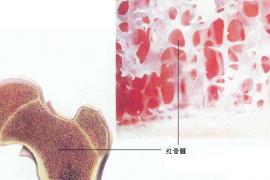 百病皆源于精竭髓枯,唯有补精生髓才是长寿之法