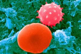 胶原蛋白肽对细胞的作用:激活、抑制、修复和促进