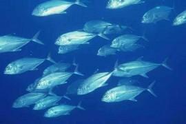 为什么美女们都喜欢吃鱼胶原蛋白肽?看看鱼胶原蛋白肽的作用!