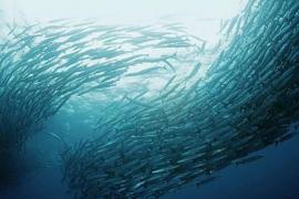 鱼胶原蛋白肽作用,什么人适合服用鱼胶原蛋白小分子肽