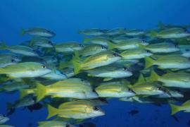 鱼胶原蛋白肽,可以吃的护肤品!
