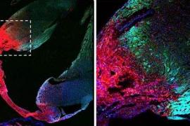 """科普:骨髓间充质干细胞的""""归巢""""特性(靶向作用)"""