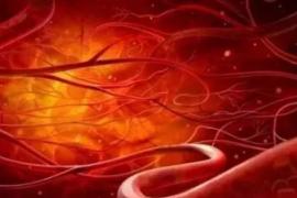 地龙起死回生的秘密活性地龙蛋白肽对血糖循环系统的改善作用