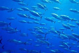 海洋鱼低聚肽对骨骼的作用