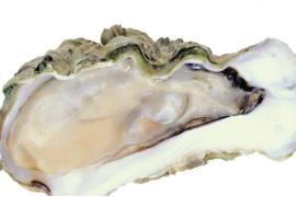 女人可以吃牡蛎肽补肾吗?细数女人吃牡蛎肽的9大好处