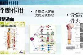 """骨髓很重要""""以髓养髓""""你一定要了解牛骨髓复合肽!"""