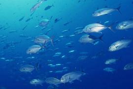 鱼胶原蛋白肽的功效
