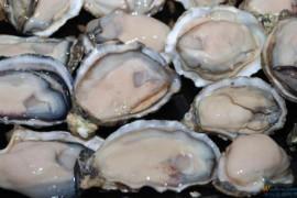 男性功能障碍前列腺炎可以吃牡蛎肽吗?