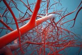 地龙蛋白肽可以调节冠状动脉微循环障碍吗?冠状动脉微循环障碍有哪些危害?