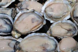 牡蛎肽男人女人都可以吃吗?牡蛎有哪些主要价值功效?