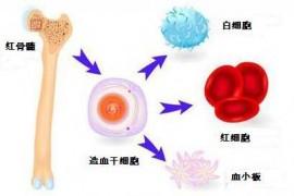牛骨髓多肽养护骨髓预防慢性疾病抗衰老靠谱吗?