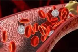 血栓吃什么好得快?地龙蛋白对血管栓塞性疾病的有什么作用?