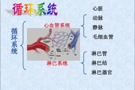 地龙蛋白肽与调节循环系统疾病的作用
