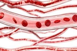 小分子肽与血管,肽对血管的营养与保护作用