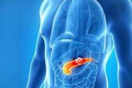 小分子肽对内分泌系统的调节作用,肽与糖尿病