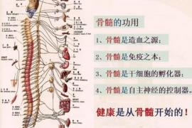 人参牛骨髓肽与骨髓营养,骨髓的功能与作用
