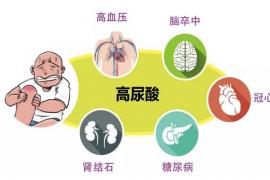 高尿酸血症和痛风的由来及其对身体的危害