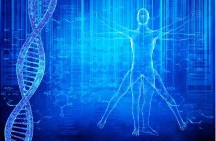 小分子肽与健康.png