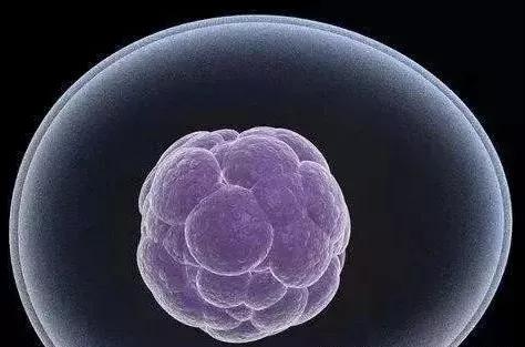 干细胞胞.png
