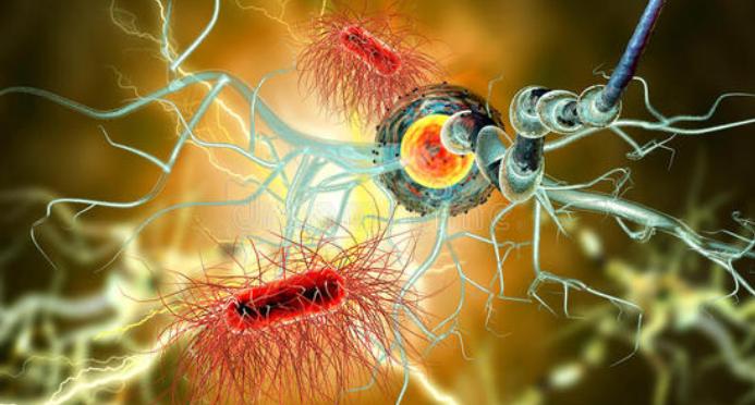 免疫细胞.png