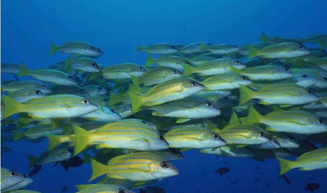 鱼胶原蛋白肽的作用.png