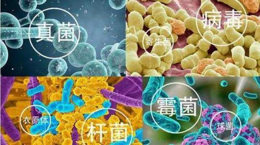 纳豆激酶抗病毒杀菌.png