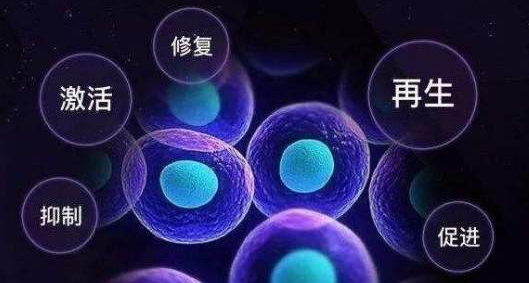 小分子肽营养细胞.png