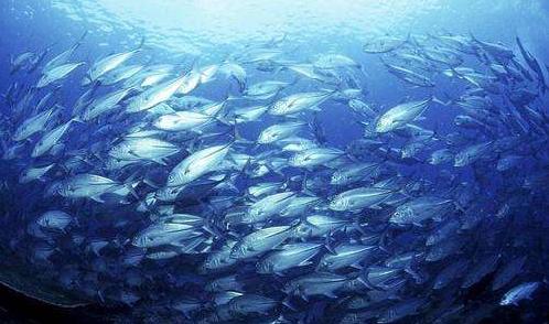 鱼胶原蛋白肽的功能与作用.png