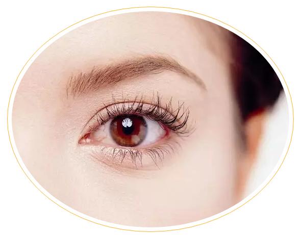小分子肽对眼睛的营养与修复作用.png