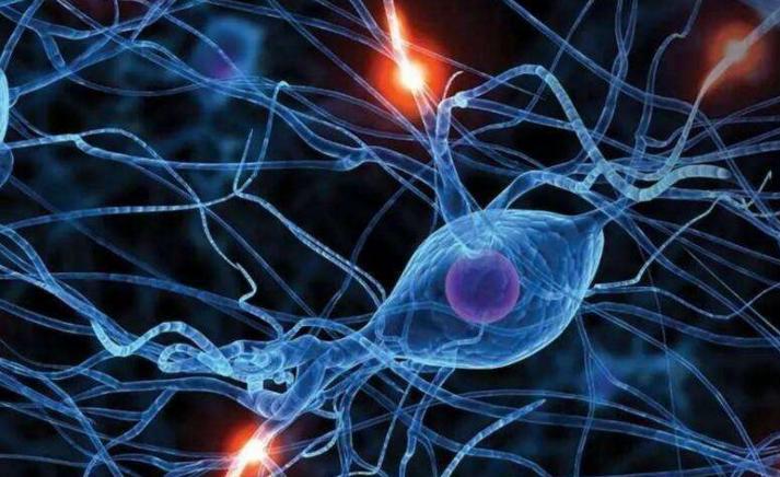 脑蛋白肽对神经系统的修复作用与脑梗塞后遗症