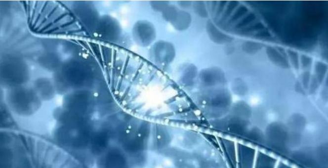小分子肽促进矿物质的吸收.png