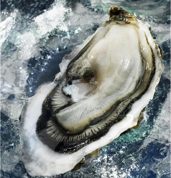 糖尿病人可以吃牡蛎吗?生吃牡蛎会得寄生虫吗?