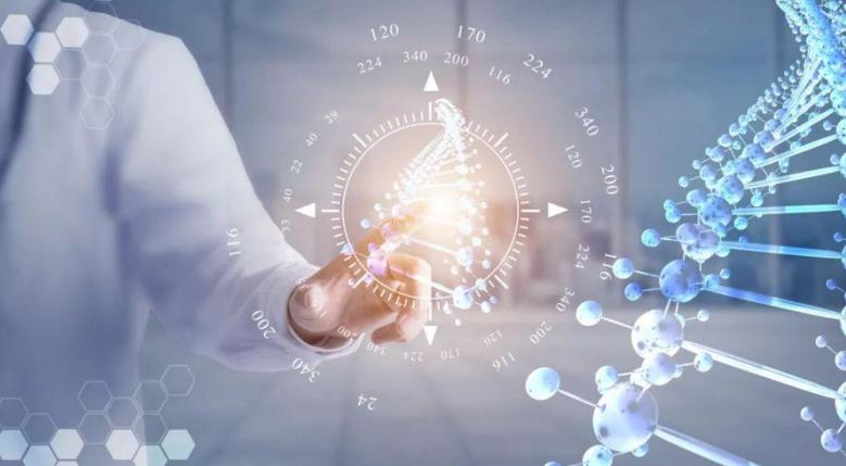 小分子肽快速补充蛋白质.png