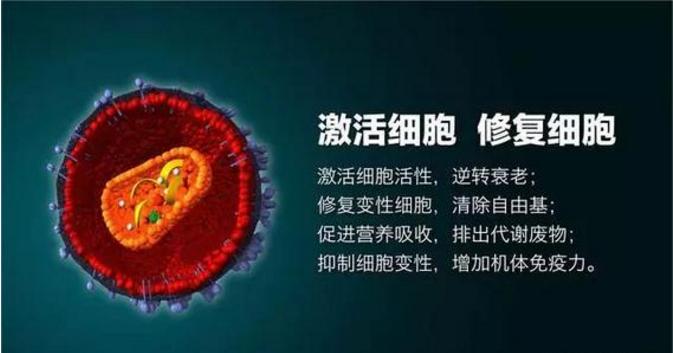 小分子肽与细胞.png